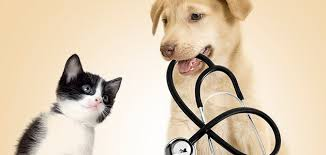 Dog and cat with stethescope