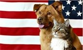Dog and cat in front of American Flag